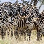 Was bedeutet Tierpopulation (Biologie)?