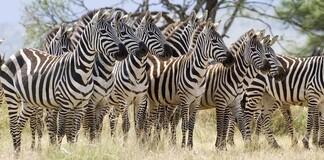 Tierpopulation