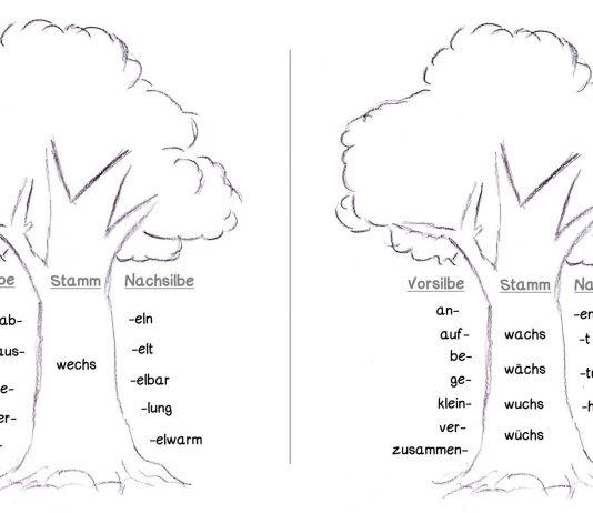 Wortstamm in der Grammatik