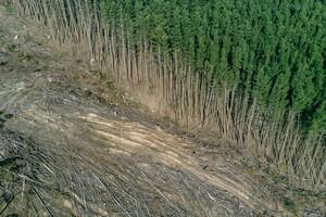 Rodung von Wald